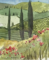 Poppies & Vinyards in Chianti